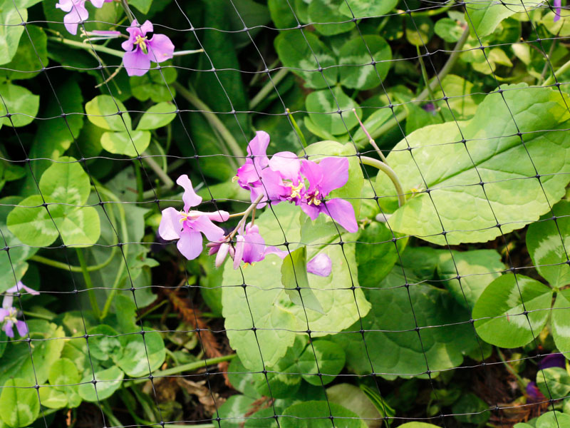 植物保護ネット