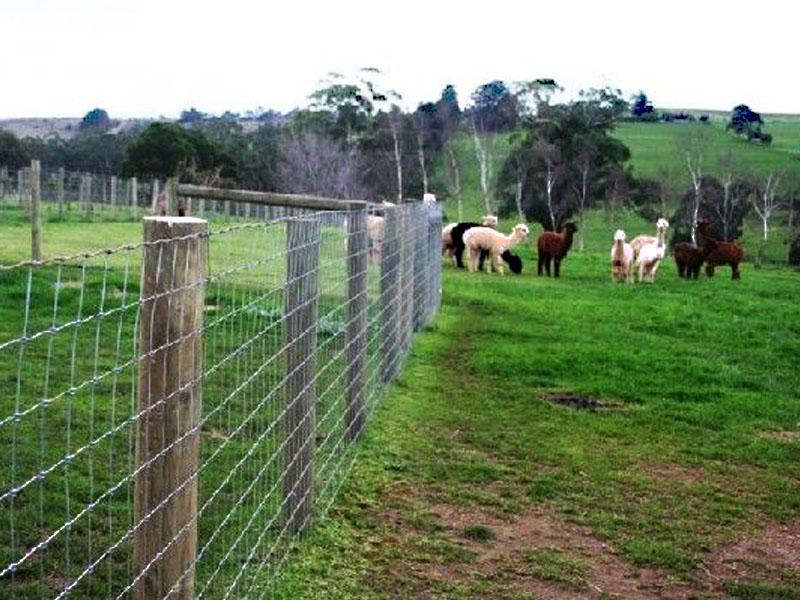 農業フェンス