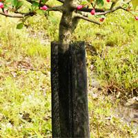 felixble-tree-guard